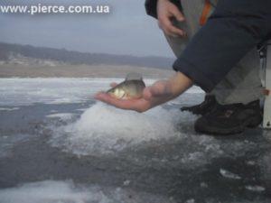 Зимняя рыбалка в Роздоле. В поисках окуня