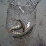 Рыбалка на Задорожном озере