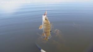 Рыбалка. Как я розлавливал обновку – спиннинг Favorite Balance. Ч. 2