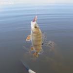 Рыбалка. Как я розлавливал обновку — спиннинг Favorite Balance. Ч. 2