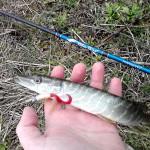 Волынские заметки о рыбалке
