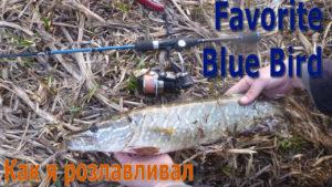 Рыбалка. Как я розлавливал спиннинг Favorite Blue Bird на р.Стыр. В поисках весеннего хищника — pierce.com.ua