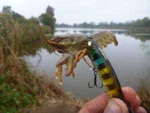 Usami Magsura атакует или на безрыбье и рак рыба